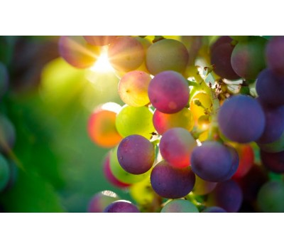 Grapes seedless mix